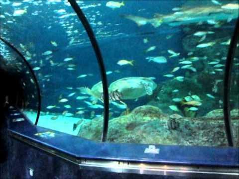 Myrtle Beach Sc Aquarium Youtube