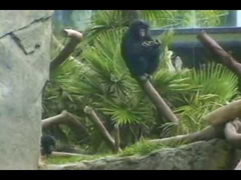 Ch 01 Observing Primates p37