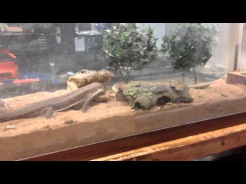 SciOnTheFly: Feeding Classroom Pet