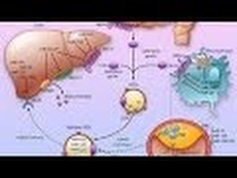 Anatomy and Physiology of Metabolism Nutrition