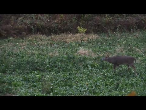 How Hinge Cutting Can Improve Deer Hunting