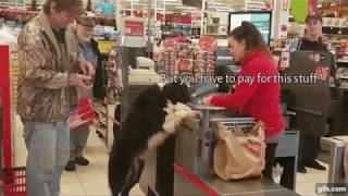 Funny Animals Compilation | Text on Animals | Animal Thoughts | Animals Chatter | What the fluff