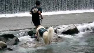 http://tabinchuya.cart.fc2.com 夢の森公園キャンプ場の脇を流れる清流...