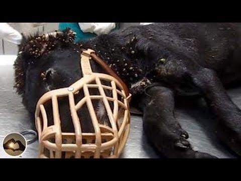 【感動する話泣ける話】実話・ゴミ箱から発見された犬