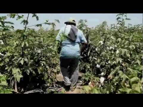 The Peru Chronicles: Organic Cotton Farming & EILEEN FISHER