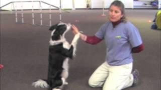 Villa La Paws - Cool Dog Tricks - Sit Up