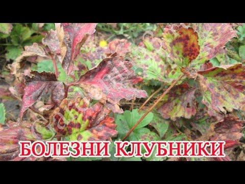 Бурая пятнистость листьев клубники. Болезни клубники