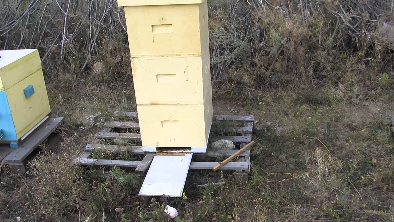 Улей для пчел из пенополиуретана сделан в Украине, by Entomologist .