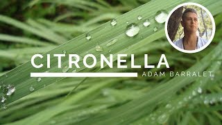 Citronella - The Oil of Non-Comparison