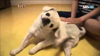 TV 동물농장 571회 #4