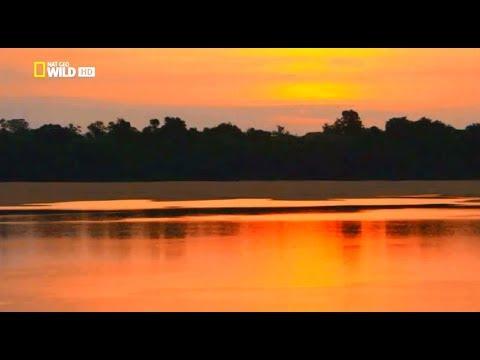 """Амазонка. """"Амазония - реки солнца"""". Документальный фильм. HD качество"""
