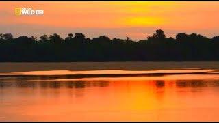 Амазонка. 'Амазония - реки солнца'. Документальный фильм. HD качество