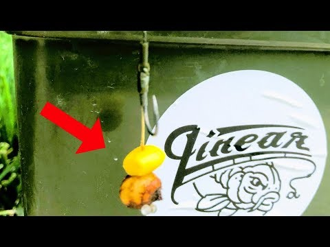 Carp Fishing With The TIGER NUT-CORN Combo (Hot Action!)