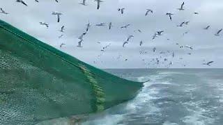Brexit: Pesca em águas turvas