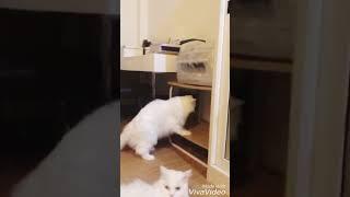 Funny Cat Fail (My Cat ,Goofy)