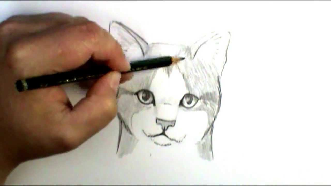 How to draw a cat face - YouTube
