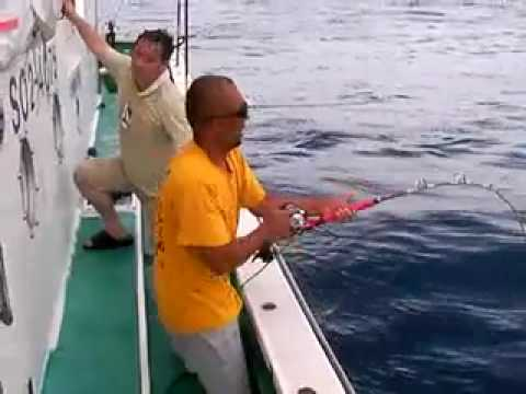 cat goes fishing how to catch the sword fish