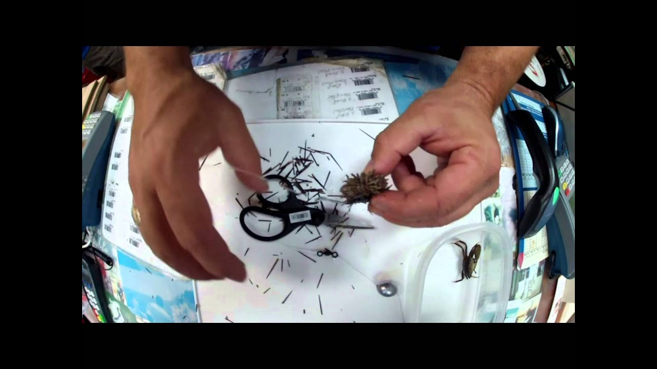 How to use urchins and fiddler crabs for sheepshead youtube for Sheepshead fishing rigs