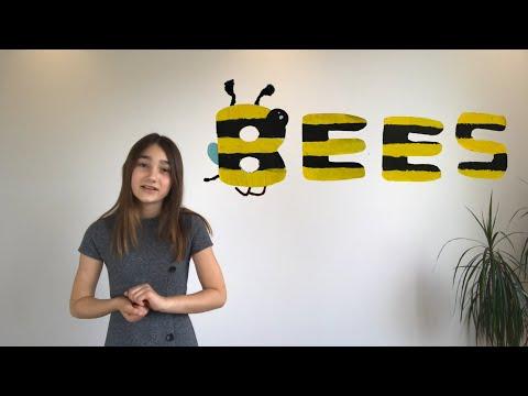 Macy – Bees