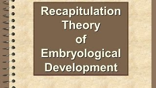 Recapitulation Theory Of Embryological Development
