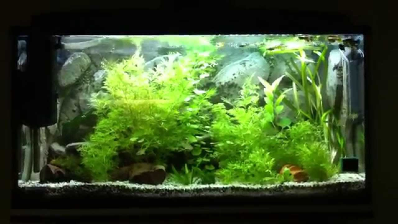 200l aquarium mit co2 anlage youtube. Black Bedroom Furniture Sets. Home Design Ideas