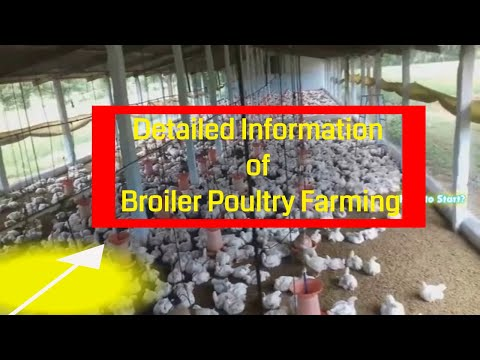 detailed information of broiler poultry farming / Own & Contract Poultry Farming  Information