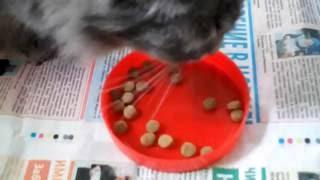 Кошка и корм Purina Cat Chow