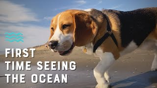 Cute beagle sees ocean for the first time [4K]