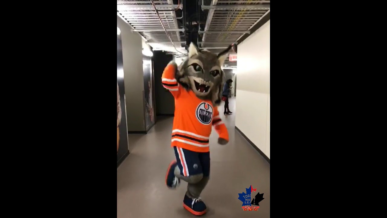 check out 8b7ee a1fc7 Edmonton Oilers - fans, mascot, practice, pregame & Kevin Smith attends -  October 11, 18, 20, 2018