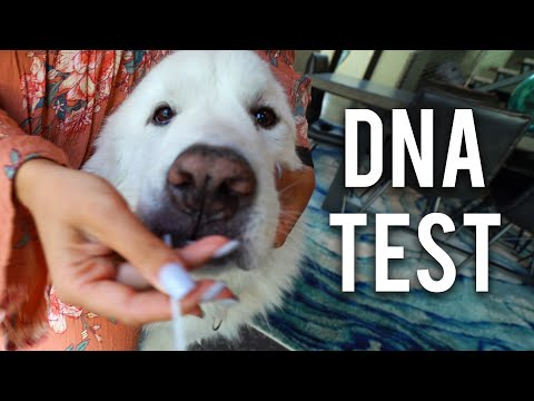 WE DNA TESTED OUR PETS! *shocking Results*
