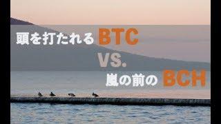 頭を打たれるビットコイン VS. 嵐の前のビットコインキャッシュ 嵐 検索動画 7