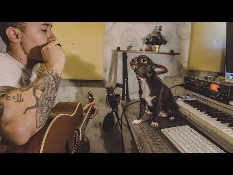 My Little Singing dog