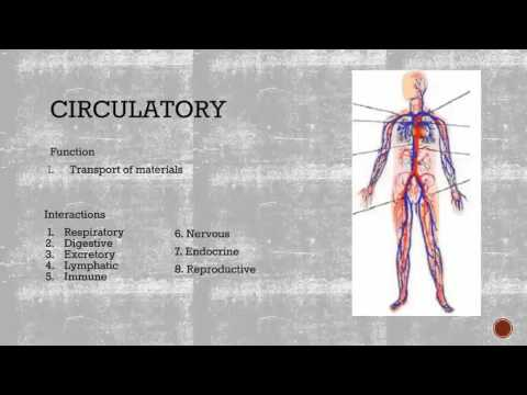 Human Body System Interactions
