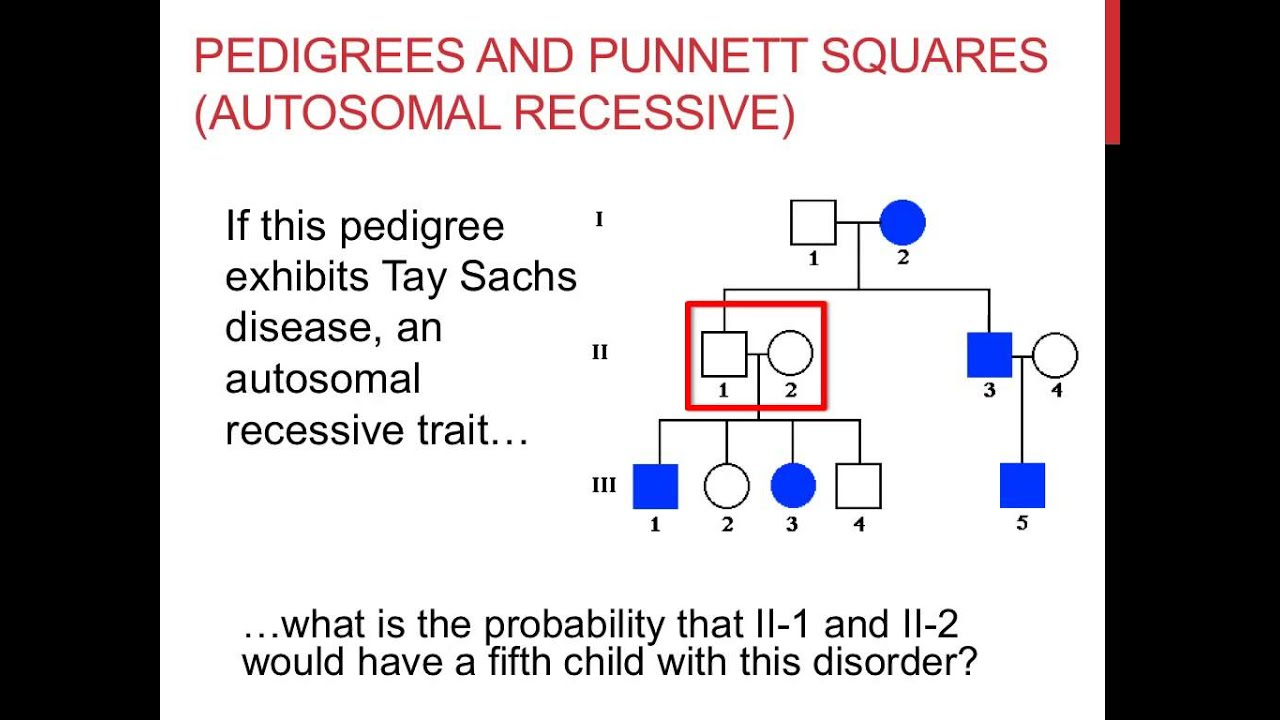 Solving pedigree genetics problems youtube geenschuldenfo Images
