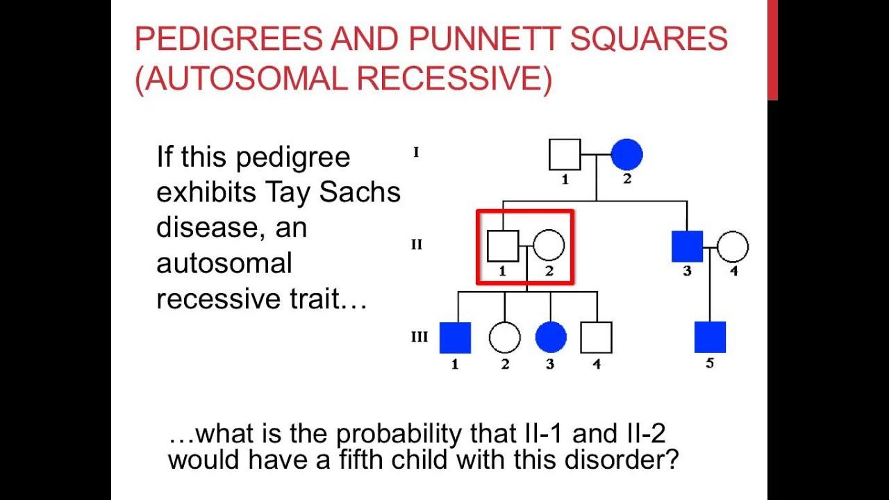 small resolution of solving pedigree genetics problems