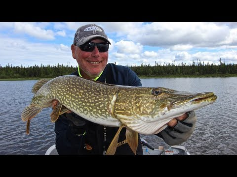 Misekumaw Monsters - A Northern Saskatchewan Pike Paradise!