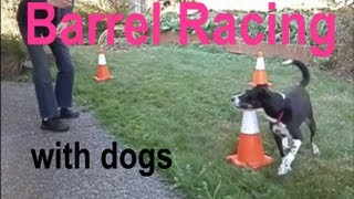 Video Barrel Racing with Dogs CARO Working Rally Obedience download MP3, 3GP, MP4, WEBM, AVI, FLV Juni 2018