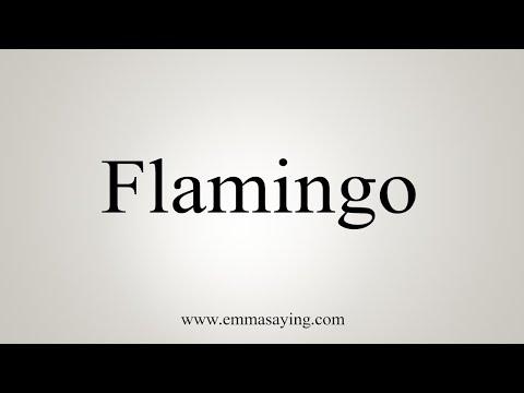 How To Say Flamingo