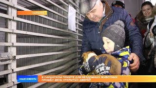 В саранском приюте для бездомных животных прошёл день открытых дверей