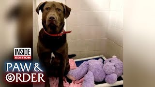 Paw & Order: Puppy Sheriff Helps Shelter 'Interrogate' Lab Over Ripped Doll