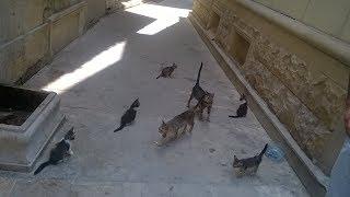Russian Cats In Baku