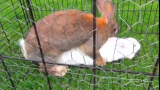 vuclip Top best animal sex videos Compilation 2014