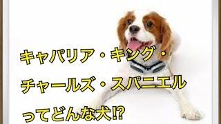 ペットで犬を飼おうと迷っている方へ〜キャバリア・キング・チャールズ...