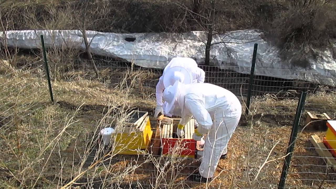 Installing bees into a Little Giant 10-Frame Hive