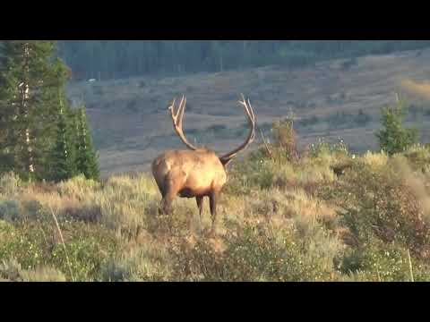 Idaho Elk Hunting With White Peaks Outfitters