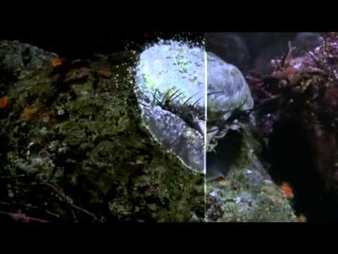 Molluscs The Survival Game clip1