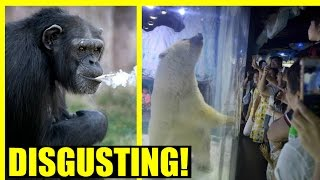 Smoking Chimp in Zoo & Polar Bear in Mall - OUTRAGE!