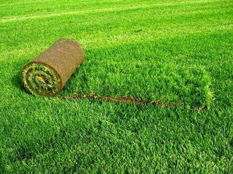 Как выращивают газон. Производство рулонного газона
