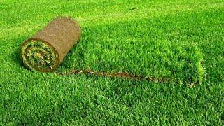 Как выращивают газон. Производство рулонного газона(Рулонный газон — это дернина газонных трав, выращенная посевом семян на специальные маты рыхлой структуры..., 2016-04-24T21:24:55.000Z)