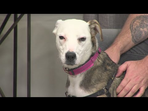 Pet of the Week: 'Riversong'